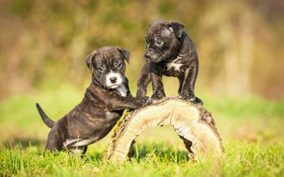 In Defense of Puppy Socialization