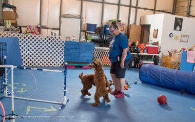 Overcoming Fear of Dog-Dog Play: An Interview With Suzanne Bryner
