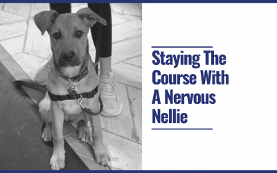 Staying The Course With A Nervous Nellie