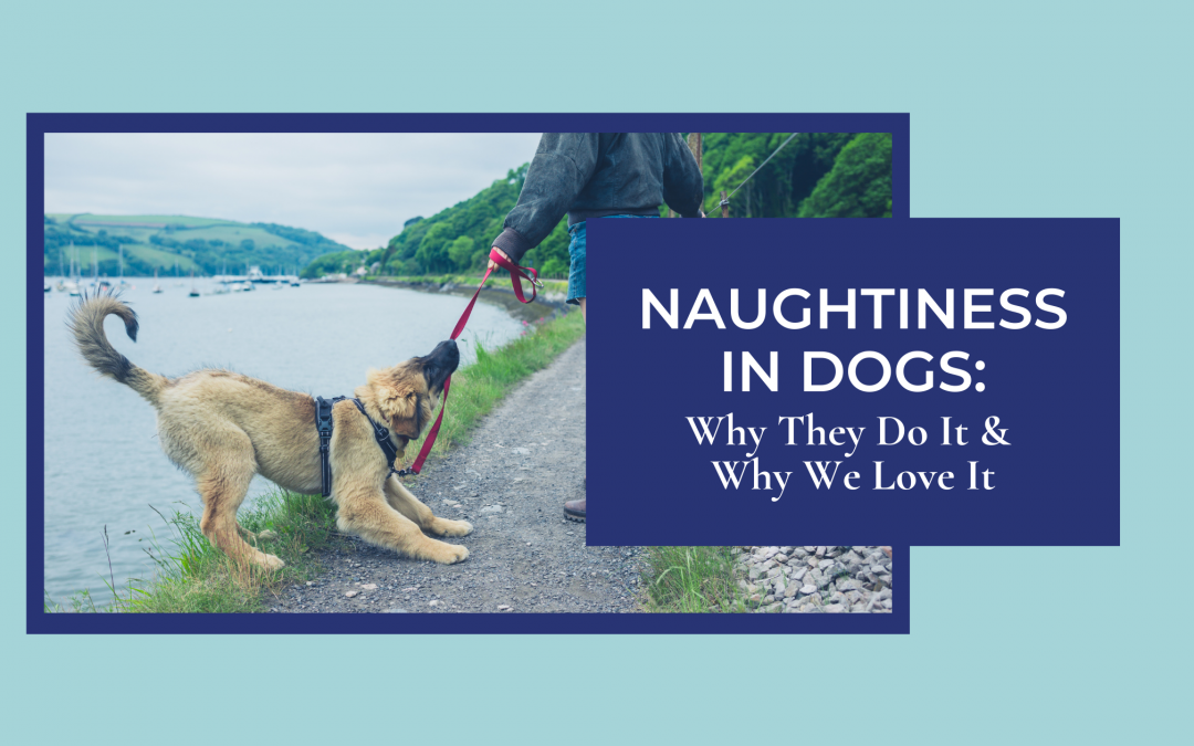 Naughtiness in Dogs: Why They Do It & Why We Love It