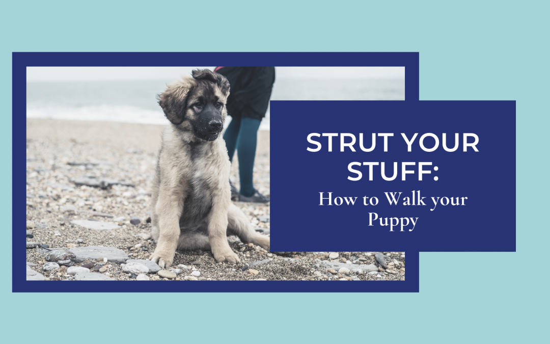 Strut your Stuff: How to Walk your Puppy