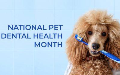 Nation Pet Dental Health Month