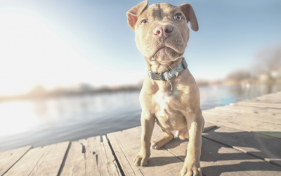 Puppy Priorities: What Really Matters in the First Few Weeks